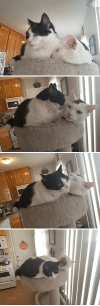 Cats, Love, and Minnie: ocUs  POCUS  OFFEE My two cats, Minnie and Gimli, love each other.