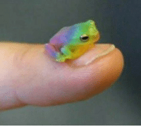 Life, Love, and Target: odinsnotwearingmakeup:  queerlove: reblog the gay frog in 30 seconds and you will meet the gay love of your life