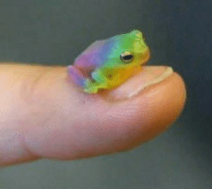 Life, Love, and Tumblr: odinsnotwearingmakeup:  queerlove: reblog the gay frog in 30 seconds and you will meet the gay love of your life