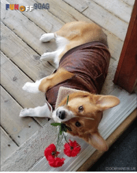Dank, Date, and Today: ODOBYANDBLUE No plans for today? Doggo wants you to be his date! Congrats to dobyandblue   IG on becoming our #9GAGFunOff Week 14 winner!