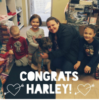 Family, Love, and Memes: OER-bow  0ce.DE:9-1nT  00-oco-to?  batoD-no?  CONGRATS  HARLEY! CONGRATS HARLEY!! This sweet boy went home with his forever family this morning. We are soo happy for him & his new family. He is going to be sooo spoiled with love & have so much fun with his new siblings. Thank you so much to his new family for rescuing