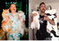 Cats, Reality, and Photo: OF 20  ds of <p>Expectations VS Reality - Taking a photo with cats</p>