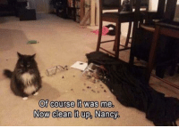 Clean It Up: Of course it was me.  Now clean it up, Nancy