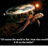 """Memes, Turtle, and 🤖: """"Of course the world is flat. How else would  it fit on the turtle?"""""""