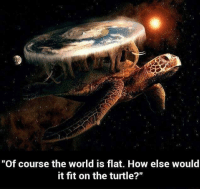 """Memes, Turtle, and 🤖: """"Of course the world is flat. How else would  it fit on the turtle?"""" Of course..."""