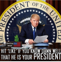America, Memes, and Savage: OF TH  merican  MADE  HIT LIKE'IF YOU KNOW DAMN WELL  THAT HE IS YOUR PRESIDEN Hell yeah he is!! Follow @_american.made for more great content!! liberal maga conservative constitution like follow presidenttrump resist stupidliberals merica america stupiddemocrats donaldtrump trump2016 patriot trump yeeyee presidentdonaldtrump draintheswamp makeamericagreatagain trumptrain triggered Partners --------------------- @too_savage_for_democrats🐍 @raised_right_🐘 @conservativemovement🎯 @millennial_republicans🇺🇸 @conservative.nation1776😎 @floridaconservatives🌴