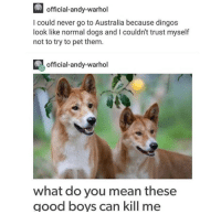 Dogs, Memes, and Andy Warhol: official-andy-warhol  I could never go to Australia because dingos  look like normal dogs and I couldn't trust myself  not to try to pet them  official-andy-warhol  what do you mean these  good boys can kill me https://t.co/9dpk1F2rs5