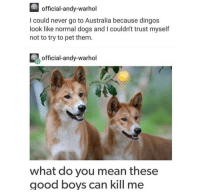 Dogs, Andy Warhol, and Australia: official-andy-warhol  I could never go to Australia because dingos  look like normal dogs and I couldn't trust myself  not to try to pet them.  official-andy-warhol  what do you mean these  good boys can kill me <p>Impossible</p>
