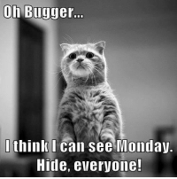 Memes, Mondays, and Monday: Oh Bugger.  I think I can see Monday.  Hide, everyone!