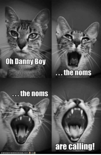 Oh Danny Boy  the noms  ICANHASCHEEZEURGER.COM  the noms  are calling!