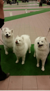 Oh dear dog. Make a look at these shoobie doobies!: Oh dear dog. Make a look at these shoobie doobies!