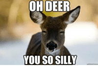 silly: OH DEER  YOU SO SILLY