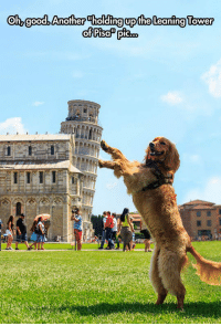"""<p>Tourist Dog.<br/><a href=""""http://daily-meme.tumblr.com""""><span style=""""color: #0000cd;""""><a href=""""http://daily-meme.tumblr.com/"""">http://daily-meme.tumblr.com/</a></span></a></p>: Oh, goodb Another Tholding upthe Leaning Tower <p>Tourist Dog.<br/><a href=""""http://daily-meme.tumblr.com""""><span style=""""color: #0000cd;""""><a href=""""http://daily-meme.tumblr.com/"""">http://daily-meme.tumblr.com/</a></span></a></p>"""