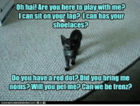 kittens   !   x: Oh hai! Are you here to play With me?  ican sitonyour lapa Ocan hasyour  Shoelaces  Do you havea red dot Didyou  hring me  noms Will you petme Can We be frenz? kittens   !   x