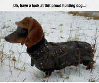 Hunting, Proud, and Dog: Oh, have a look at this proud hunting dog... <p>A Professional For The Job.</p>