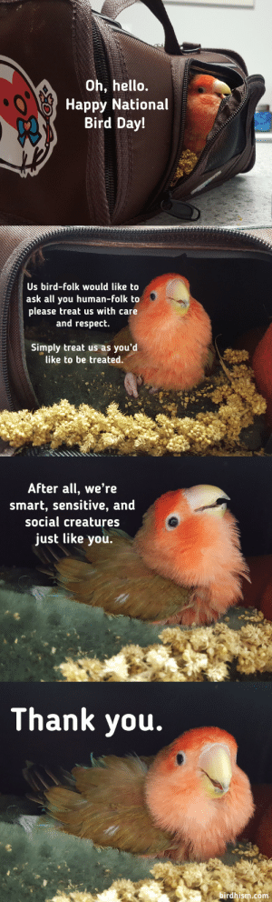 Hello, Respect, and Tumblr: Oh, hello.  Happy National  Bird Day!   Us bird-folk would like to  ask all you human-folk to  please treat us with care  and respect.  Simply treat us as you'd  like to be treated.   After all, we're  smart, sensitive, and  social creatures  just like you.   Thank you.  birdhism.com birdhism:  He's back.