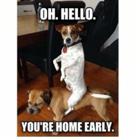 Oh hi: OH HELLO.  YOU'RE HOME EARLY Oh hi
