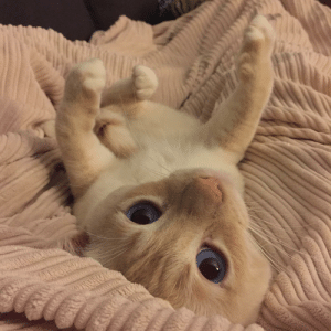 Oh. Hi there.: Oh. Hi there.