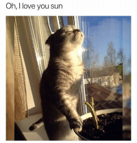 Cute, Funny, and Love: Oh, I love you sun @drsmashlove has cute memes