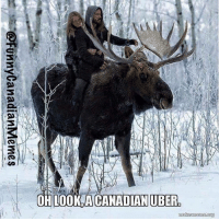 Oh look, a Canadian Uber            LOL   #moose: Oh look, a Canadian Uber            LOL   #moose