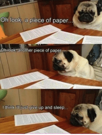 Trying to do my assignments like https://t.co/UpM0omLzrW: Oh look, a piece of paper.  Ohslook another piece of paper  l think i'll just give up and sleep Trying to do my assignments like https://t.co/UpM0omLzrW