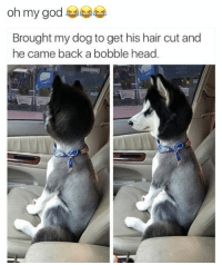 😂😂😂😂😂 - - - - - - - - 420 memesdaily Relatable dank MarchMadness HoodJokes Hilarious Comedy HoodHumor ZeroChill Jokes Funny KanyeWest KimKardashian litasf KylieJenner JustinBieber Squad Crazy Omg Accurate Kardashians Epic bieber Weed TagSomeone hiphop trump rap drake: oh my god  Brought my dog to get his hair cut and  he came back a bobble head. 😂😂😂😂😂 - - - - - - - - 420 memesdaily Relatable dank MarchMadness HoodJokes Hilarious Comedy HoodHumor ZeroChill Jokes Funny KanyeWest KimKardashian litasf KylieJenner JustinBieber Squad Crazy Omg Accurate Kardashians Epic bieber Weed TagSomeone hiphop trump rap drake