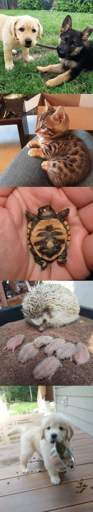 Oh my gosh, look at those baby animals: Oh my gosh, look at those baby animals