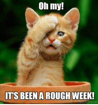Memes, Rough, and 🤖: Oh my!  ITS BEEN A ROUGH  WEEK!  on by Kittyworks Aye yai yai!