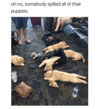 <p>Oh gosh, I would fall over for sure</p>: oh no, somebody spilled all of their  puppies. <p>Oh gosh, I would fall over for sure</p>