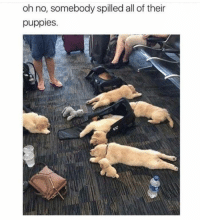Memes, Puppies, and Happy: oh no, somebody spilled all of their  puppies. 28 Happy Memes & Pics To Turn Your Frown Upside Down