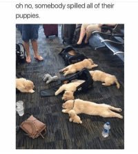 Puppies, All, and Oh No: oh no, somebody spilled all of their  puppies.