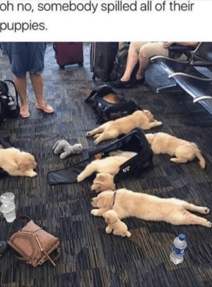 OMG! I want to be the owner.: oh no, somebody spilled all of their  puppies. OMG! I want to be the owner.