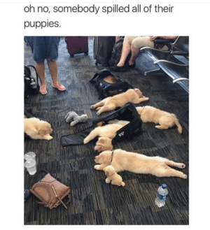 positive-memes:  Oh gosh, I would fall over for sure: oh no, somebody spilled all of their  puppies. positive-memes:  Oh gosh, I would fall over for sure