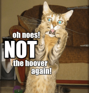 Hoover, Oh Noes, and  Again: oh noes  NOT  the hoover  again