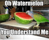 Watermelone: Oh Watermelon  You  Understand Me
