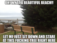 Beautiful, Fucking, and Beach: OH!WHATA BEAUTIFUL BEACH!!  LET MEJUSTSIT DOWN AND STARE  AT THIS FUCKING TREE RIGHT HERE They have installed a new bench