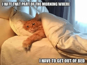 Cats, Click, and Kittens: OHATE THAT PARTOFTHE MORNING WHERE  OHAVE TO GET OUTOFBED My Number One Cutie Patootie - Click to see loads of great pictures of cats and kittens to brighten your day