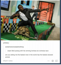 Usain Bolt, Animal, and World: oheezy:  awisemanoncesaidnothing  Usain Bolt posing with his winning tortoise at a tortoise race  are you telling me the fastest man in the world has the fastest slowest  animal  378,211 notes https://t.co/iWXpQlrLhr