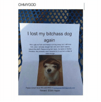 Bitch, Fake, and Love: OHM YGOD  I lost my bitchass dog  again  He's ugly as fuck and keeps running away but I still love  him, plus already bought him shit and I don't wanna  return the stuff. Please bring him back, his name is Senior  Woofers. He probably won't respond to it cus he's a fake lil  bitch though  Please contact me at 661-440-5950 or  booteyealer8900@gmailCom  Reward: $5ish maybe @babe