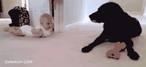 srsfunny:Baby Bonding With The Pet Dog: OHMAGIF.COM srsfunny:Baby Bonding With The Pet Dog