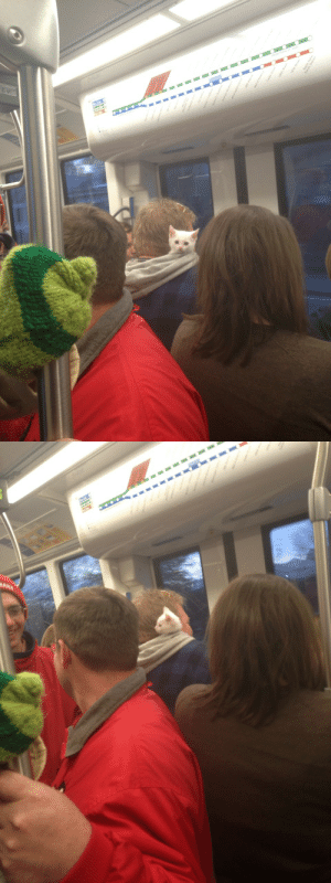 ohmysloth:This little guy popped out of a guy's hood on the lightrail :3: ohmysloth:This little guy popped out of a guy's hood on the lightrail :3