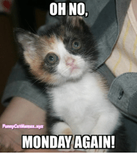 From Funny Cat Memes: OHNO,  Funny CatMemes.xyz  MONDAY AGAIN! From Funny Cat Memes