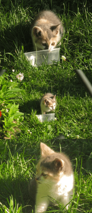 Food, Tumblr, and Blog: ohnopicturesofanothercat: She smol. A kitten has been visiting the garden, so I put out some food.