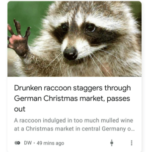 Me irl: oictureNnwidoa/ Klime  Drunken raccoon staggers through  German Christmas market, passes  out  A raccoon indulged in too much mulled wine  at a Christmas market in central Germany o...  DW • 49 mins ago  Ow Me irl