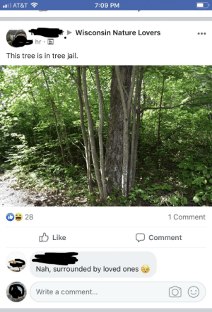 Something on my FB that seemed wholesome. via /r/wholesomememes https://ift.tt/2ZsCYFw: oil AT&T  7:09 PM  Wisconsin Nature Lovers  hr  This tree is in tree jail.  28  1 Comment  Like  Comment  Nah, surrounded by loved ones  Write a comment... Something on my FB that seemed wholesome. via /r/wholesomememes https://ift.tt/2ZsCYFw