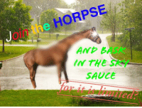 Sauce, Bask, and And: oin the HORPSE  AND BASK  IN THE SRY  SAUCE