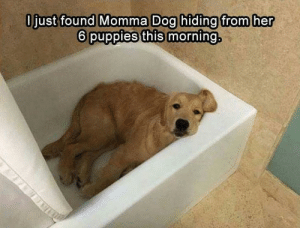 Meirl: Ojust found Momma Dog hiding from her  6 puppies this morning. Meirl