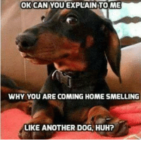 Huh, Internet, and Memes: OK CAN YOU EXPLAIN TO ME  WHY YOU ARE COMING HOME SMELLING  LIKE ANOTHER DOG, HUH? Saw this one circling the internet and had to share...