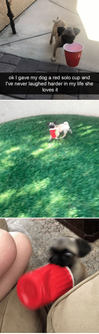 30+ Hilarious Dog Snapchats That Are Impawsible Not To Laugh At (Part 4) #dogsfunnycutest: ok I gave my dog a red solo cup and  I've never laughed harder in my life she  loves it 30+ Hilarious Dog Snapchats That Are Impawsible Not To Laugh At (Part 4) #dogsfunnycutest