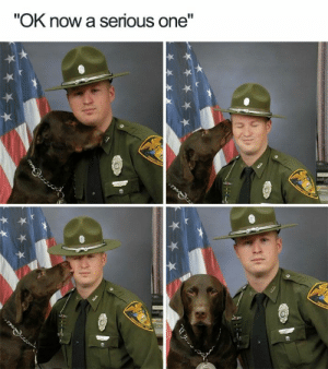 "Animals, Funny, and Memes: ""OK now a serious one"" 33 Happiest Dog Memes Ever That Will Make You Smile From Ear To Ear #dogmemesfunny #dogmemes #dog #memesdaily #memes #funny #funnymemes #lovelyanimalsworld - Lovely Animals World"